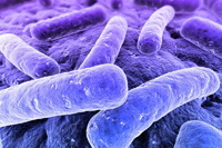 bacteria 1